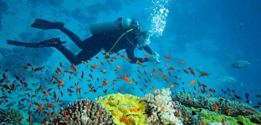 Pour les plongeurs confirmés, quel équipement ?